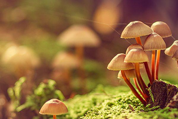 """Brainless Fungi"" Extraordinarily Complex"