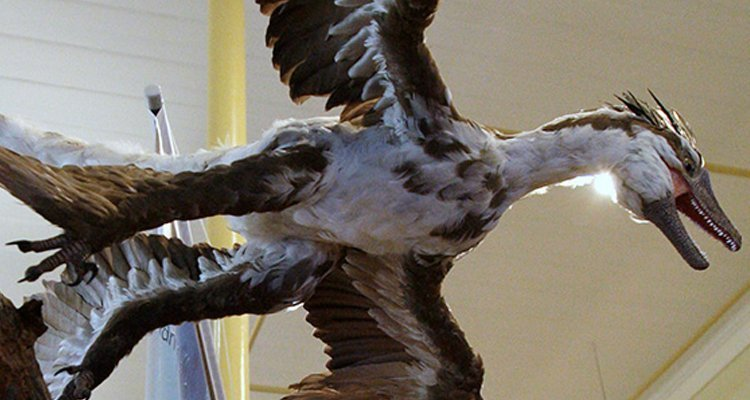 Microraptor Discovered with Lizard in Its Belly
