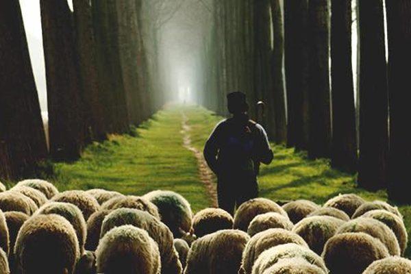 Our Shepherd-king