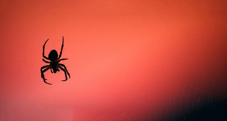 Angry Spiders Blame, You Guessed It, Climate Change