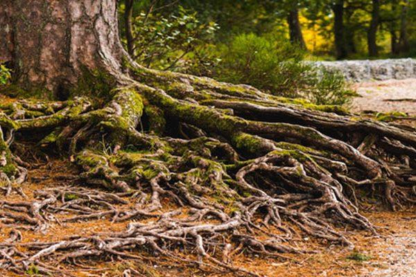 The Genealogies Of Jesus