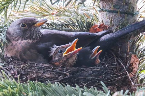 birds and babes; meant to leave the nest